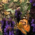 PURPLE, BUTTERFLY